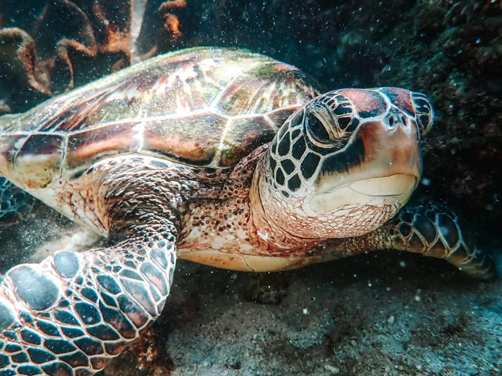 Things You Should Never Do In Scuba Diving: Touch Marine Life