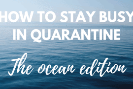 How to stay busy in quarantine - the ocean edition